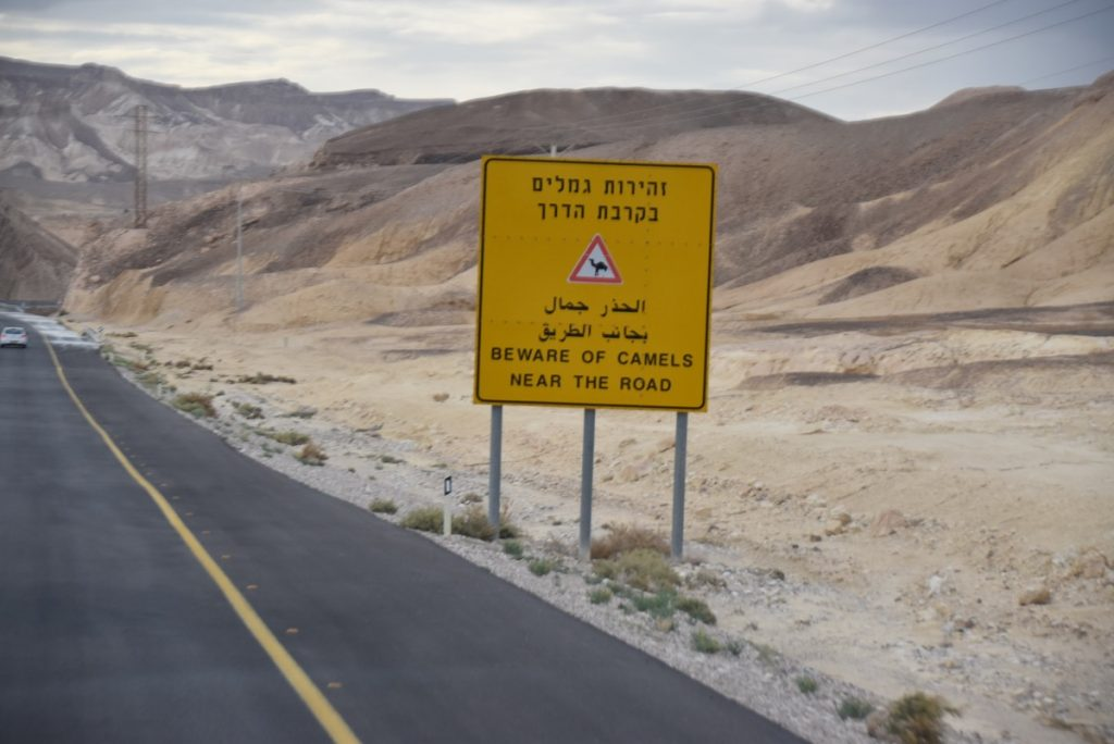 Camel crossing Nov 2019 Israel Tour Group with John DeLancey