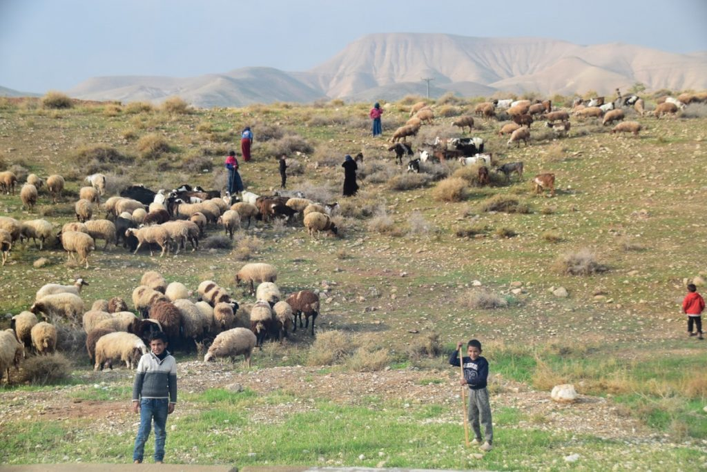Shepherd January 2020 Israel Tour with John DeLancey and BIMT