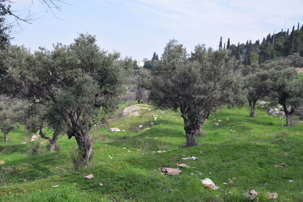 Garden of Gethsemane Feb 2020 Israel Tour with John DeLancey and BIMT