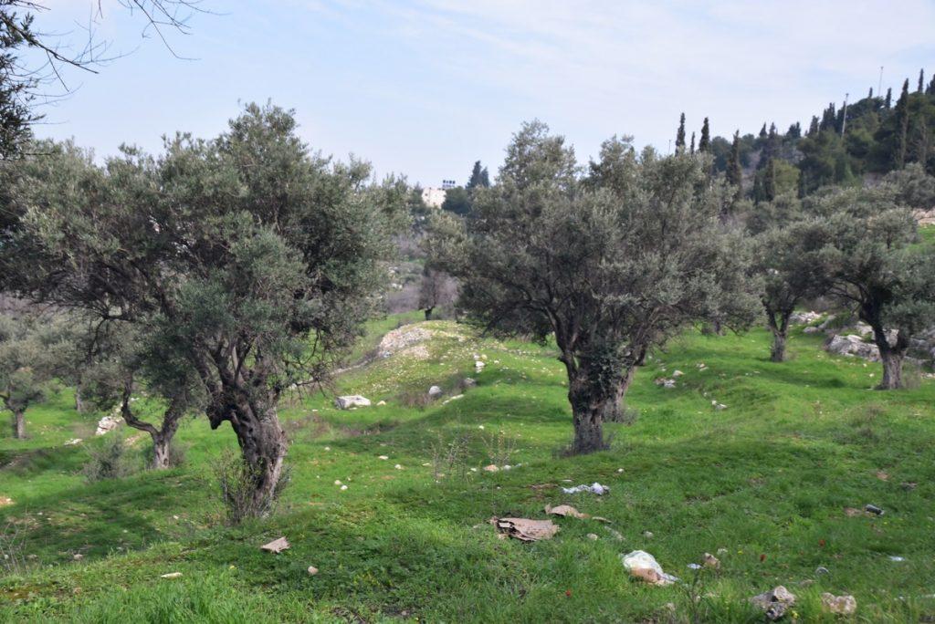 Garden of Gethsemane Feb 2020 Israel Tour with John DeLancey and BIMT